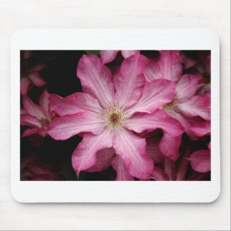 Stunning pink clematis print mouse pad