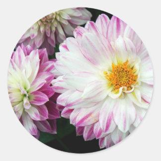 Stunning pink dahlia print classic round sticker