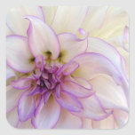 Stunning Purple and White Dahlia Flower Square Stickers