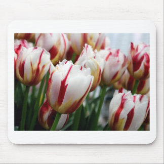 Stunning red and white tulip print mousepads