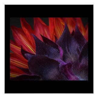 Stunning Red Sunflower Poster