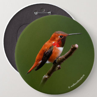 Stunning Rufous Hummingbird on the Cherry Tree 6 Cm Round Badge