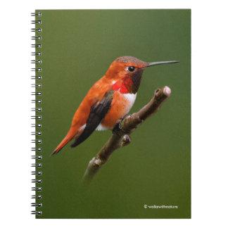 Stunning Rufous Hummingbird on the Cherry Tree Notebook