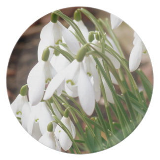 Stunning Snowdrops Plate