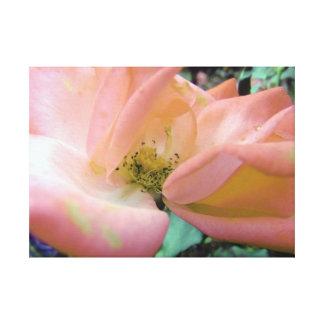 Stunning Soft Peach Delicate Rose Canvas Print