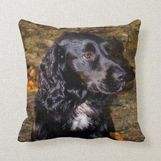 Stunning Spaniel cushion