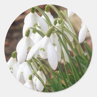 Stunning Spring Snowdrops Round Sticker