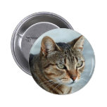 Stunning Tabby Cat Close Up Portrait Pins