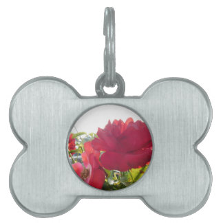 Stunning Unique Eye Catching Design Pet Tag