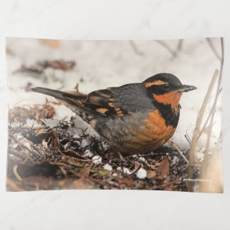 Stunning Varied Thrush Songbird in the Snow Trinket Trays