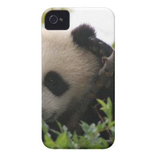 Su Lin, giant panda bear cub at the San Diego Zoo iPhone 4 Case-Mate Case