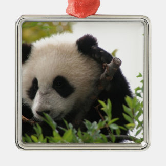 Su Lin, giant panda bear cub at the San Diego Zoo Christmas Ornament