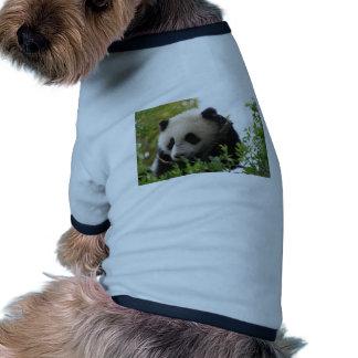 Su Lin giant panda bear cub at the San Diego Zoo Dog Tshirt