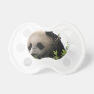 Su Lin, giant panda bear cub at the San Diego Zoo Baby Pacifiers
