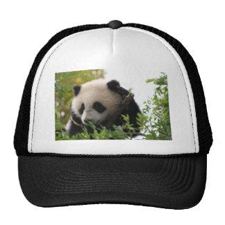Su Lin, giant panda bear cub at the San Diego Zoo Trucker Hat