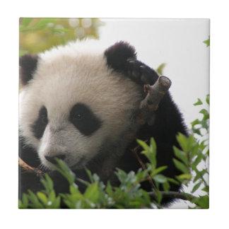 Su Lin, giant panda bear cub at the San Diego Zoo Small Square Tile