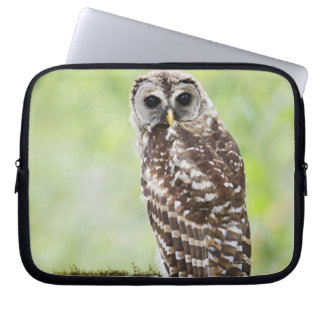 Sub-adult recently having left the nest laptop sleeve