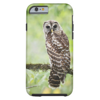 Sub-adult recently having left the nest tough iPhone 6 case