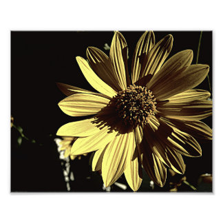 Subdued Yellow 10x8 Photo Print