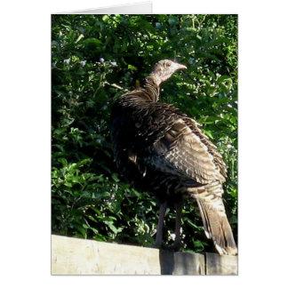 Suburban Wild Turkey Card