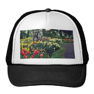 Successive Colors Mesh Hat