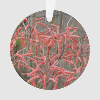 succulent aloe flowers pink neat flower photo