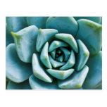 Succulent Closeup Postcard