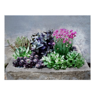 Succulent Container Garden Poster