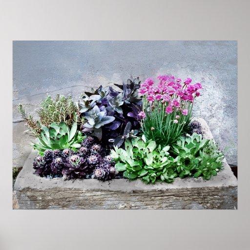 Succulent Container Garden Poster