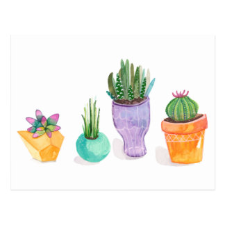 Succulent Display Postcard