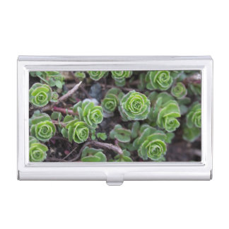 Succulent Photography Business Card Holder