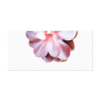 Succulent Photography Canvas Print