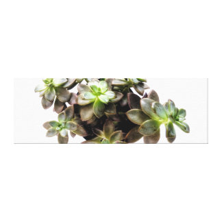 Succulent Photography II Canvas Print