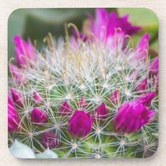 succulent plant coaster