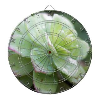 succulent plant dartboard