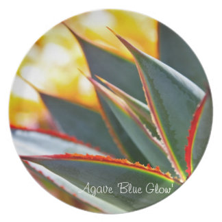 Succulent plant dinner plate: Agave 'Blue Glow' Dinner Plate