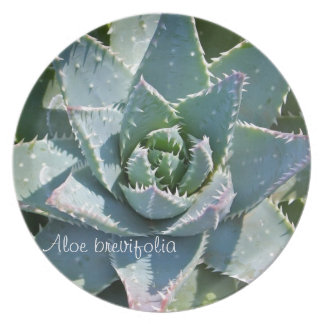 Succulent plant dinner plate: Aloe brevifolia Party Plates