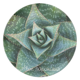 Succulent plant dinner plate: Aloe saponaria Plate