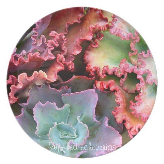 Succulent plant dinner plate: Ruffled echeverias Plate