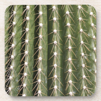 succulent plant in the garden beverage coasters