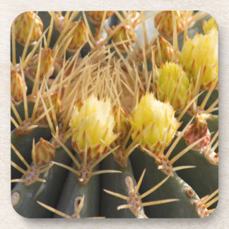 succulent plant in the garden coaster