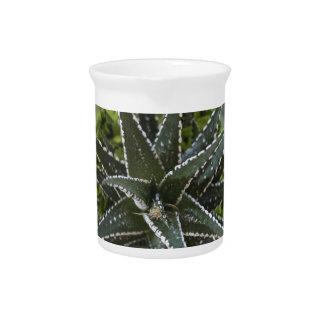succulent plant pitcher