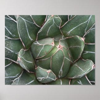 Succulent Plant Value Poster Paper (Matte)