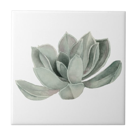 Succulent Plant Watercolor Painting Small Square Tile