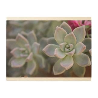 Succulent, succulents, wood art, nature, wall art