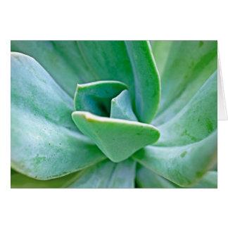 Succulent Swirl Card