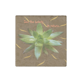 Succulentl Plant Natural, Beauty In Nature Magnet
