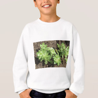 Succulents at The Sky Garden, London Sweatshirt