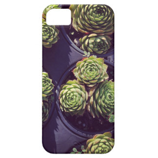Succulicious hen and chicks barely there iPhone 5 case