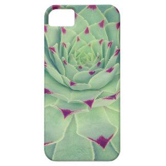 Succulicious succulent iPhone 5 cover